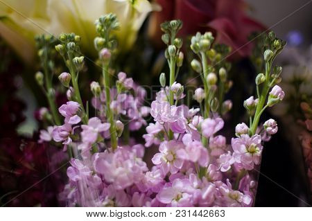 Macrophotography Of A Tender Bouquet Consisting Of Beautiful Lilac Flowers With Unopened Buds In A F
