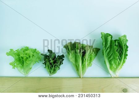 Green Oak,red Oak, Red Cos, Red Leaf Lettuce, Hydroponic, Organic, Vegetables Salad Collection Isola