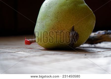 Snail Sitting On Green Pear And Tree Trunk And Crawls To Broccoli, Wooden Bamboo Backdrop, Close-up