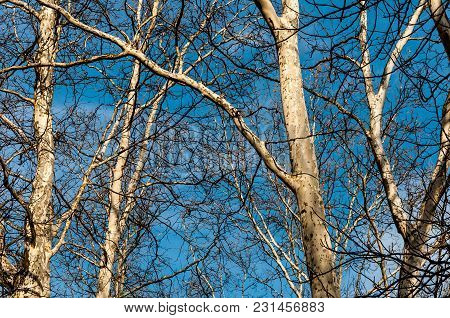 Beautiful View Of The Blue Sky Looking Through The Branches From The Forest