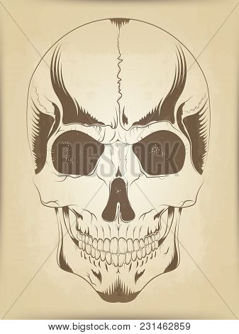 Vector Illustration Of A Human Skull Sketch In Gothic Style On Parchment Background. Page Of An Old