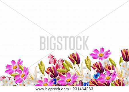 Floral Background. Colorful And Bright Spring Flowers.