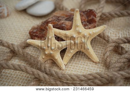 Close Up Of A Sarfish On Rustic Marine Background With Copy Space. Summer And Vacation Background Co