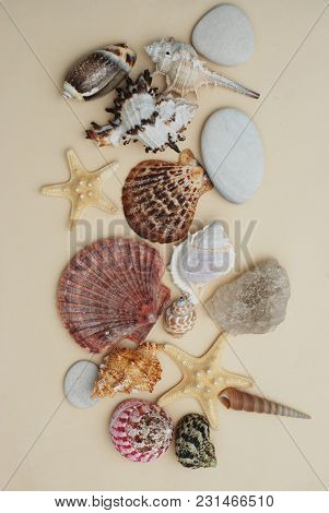 Summer And Vacation Concept. Mix Of Shells And Stones Over Ivory Board
