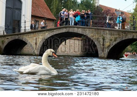 A White Swan Splashes In The Water. Tourists Look At It From The Bridge.