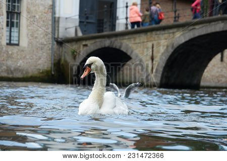 A White Swan In The Water Close Up. In The Background A Bridge With Tourists. The Territory Of The C