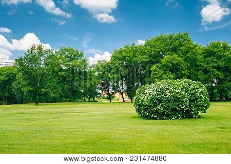 Beautiful Lush Bushes In City Garden. Sunny Summer Landscape
