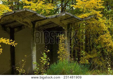 Abandoned Bus Stop At Autumn Forest Bushes