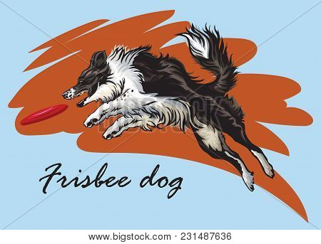 Vector Colorful Illustration With Dog (border Collie) Isolated On Blue And Red Background. Fluffy Bl