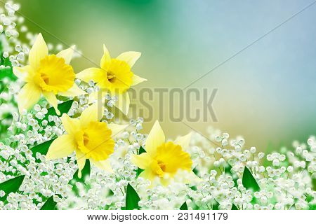 Spring Landscape. Flowers Lily Of The Valley. Narcissus