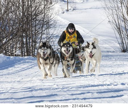 Kamchatka, Russia - February 24, 2017: Traditional Kamchatka Dog Sledge Race Elizovsky Sprint