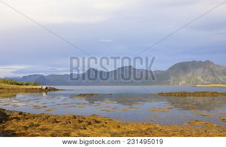 Scenic Fjord On Lofoten Islands With Towering Mountain Peaks And Yellow Algae In Foreground. Lofoten