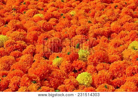 Heap Of Marigold Flowers During Festival Season Pune
