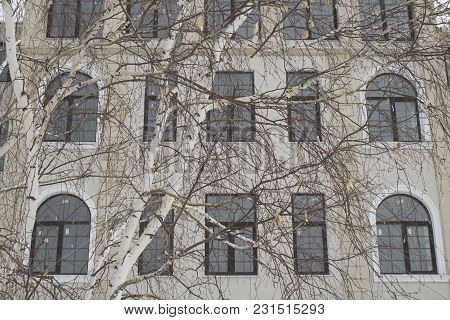 Tree And Building. Urban Landscape. Urban Background. City Landscape.