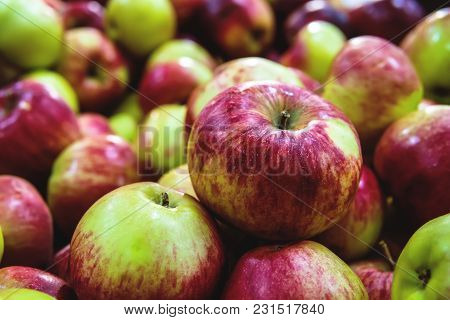 Fresh Raw Lot Of Green Red Apples On Counter, Many Organic Fresh Sweet Apples, Pile Apples Forming A