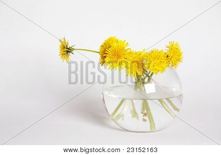 Yellow Dandelions In A Glass Vase