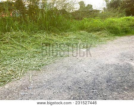 Tall Grass Near The Road At Thailand