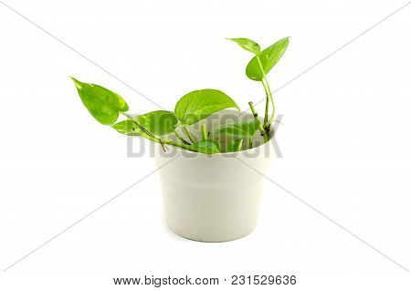 Green Potted Plant Isolated On White Background