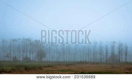 Foggy Morning And Trees Covered With Mist, Punjab, India