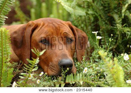 Peekaboo Dog