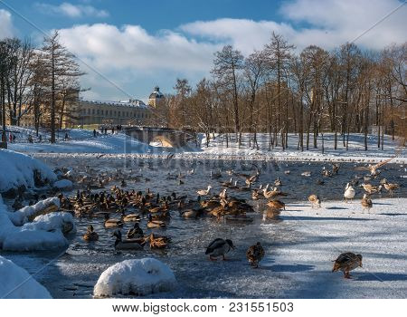View Of The Gatchina Palace From The White Lake. Winter. In The Water Of The Pond There Are Many Bir