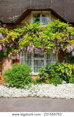 Traditional english country thatched cottage decorated with plants and blooming flowers in rural Southern England UK