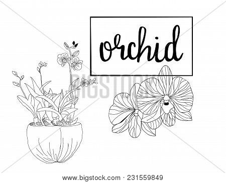 Hand Drawn Sketch Orchid Flowers In Graphic Style. Black And White With Line Art Illustration  For C