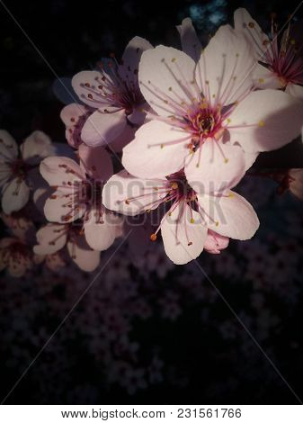 First Flush Of Spring.  Flowers Redolent Of Springtime.