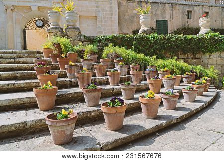 Potted Flowers Pansies Flowers In The Presidential Garden Sr. Anton In Attard Malta Buskett Gardens