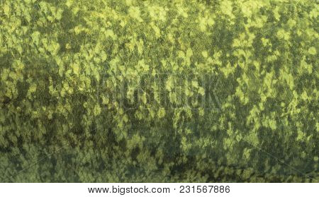 Fishing Camouflage Background Of Solver Carp Fish Scale Skin