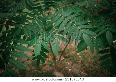 Branch With Green Leaves On A Tropical Plant