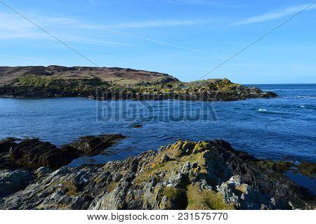 Seals At The Isle Of Man