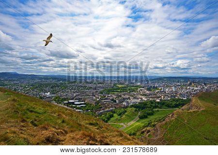 Seagull Flies Over Edinburgh City View - Taken From Arthur Seat