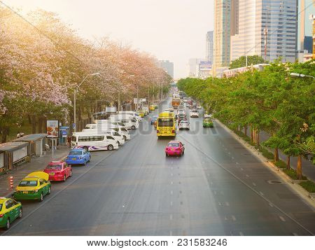 Bangkok, Thailand - April 17: Tabebuia Rosea Trees Or Pink Trumpet Trees Are In Bloom Along The Road