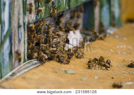 Macro Close Up Of Flying Bees In Front Of Wooden Colorful Beehive. Large Swarm (squad) Of Bees In Su