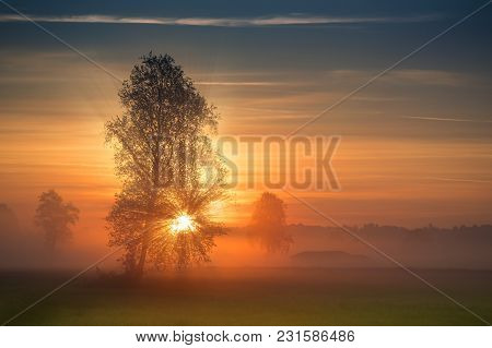 The First Rays Of The Sun Breaks Through The Branches Of A Tree At Sunrise. Misty View At Summer Mor