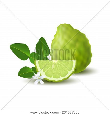Isolated Colored Green Whole And Slice Of Juicy Bergamot, Kaffir Lime With Green Leaves, White Flowe