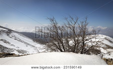 A Lonely Leafless Tree In The Snowy Mountains Of Northern Israel
