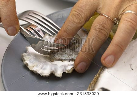 Open Shell With Oyster In Hand, Nutritious Healthy Delicious Food, Delicacy And Vegetarian Food