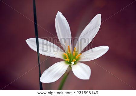 Fresh White Floret On The Dark Background Photo