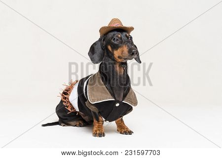 Close-up Portrait In Full Growth Dachshund Dog With Cowboy Costume And Western Hat Isolated On Gray
