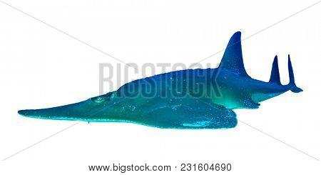 Giant Guitarfish (Shovelnose Ray) isolated on white background. Shark Ray