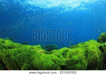 Underwater fish and ocean