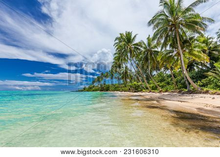 Wild natural beach with palm trees on south side of Upolu, Samoa Islands