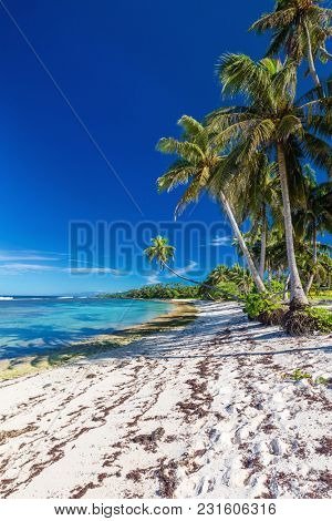 Amazing deserted tropical beach on south side of Samoa Island with palm trees, Upolu