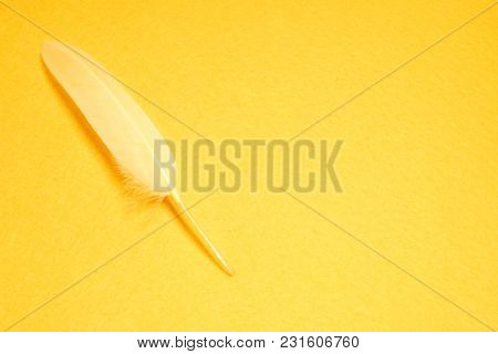 White feather on a yellow background
