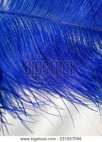 Blue feathers. Carnival. Colored feather