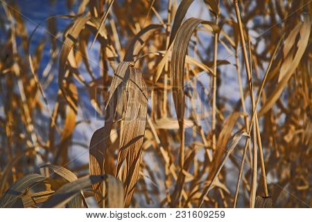 The Stems Of Plants In Winter On A Blurred Background