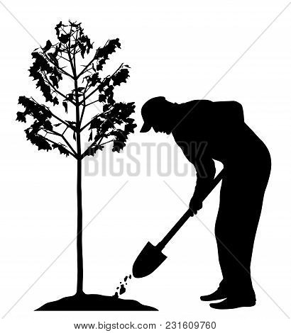 Man Planting A Tree. Isolated White Background. Eps File Available.