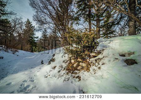 A Winter Hike In Reader Rock Garden